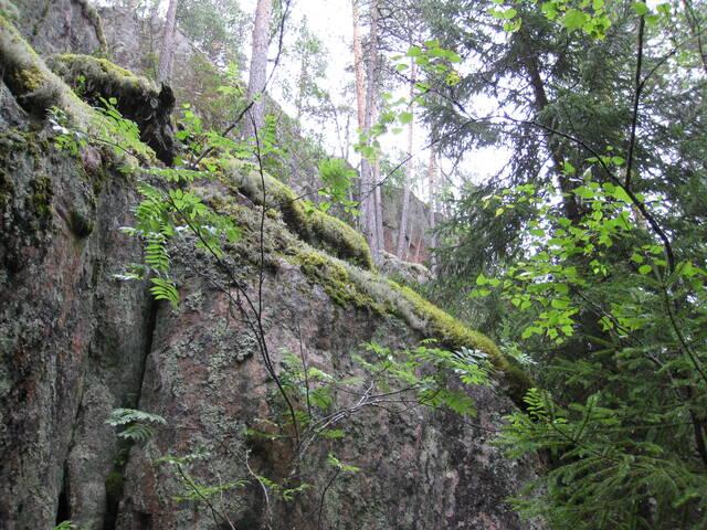 Metsälain lakisääteisten luontokohteiden mukainen jyrkänne