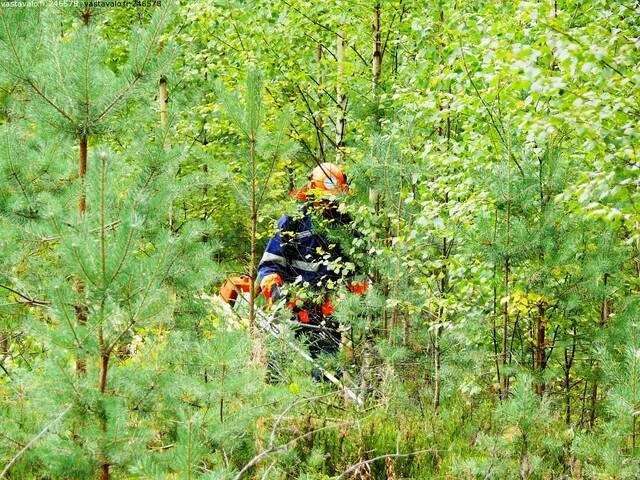 Metsuri raivaamassa taimikkoa