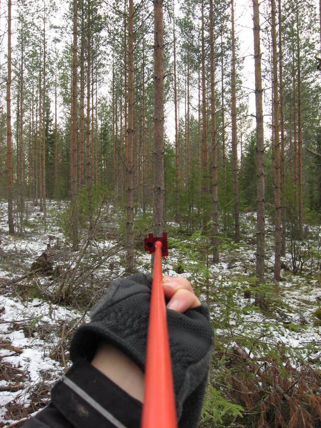 Relaskooppikoealalta mitataan puuston pohjapinta-ala