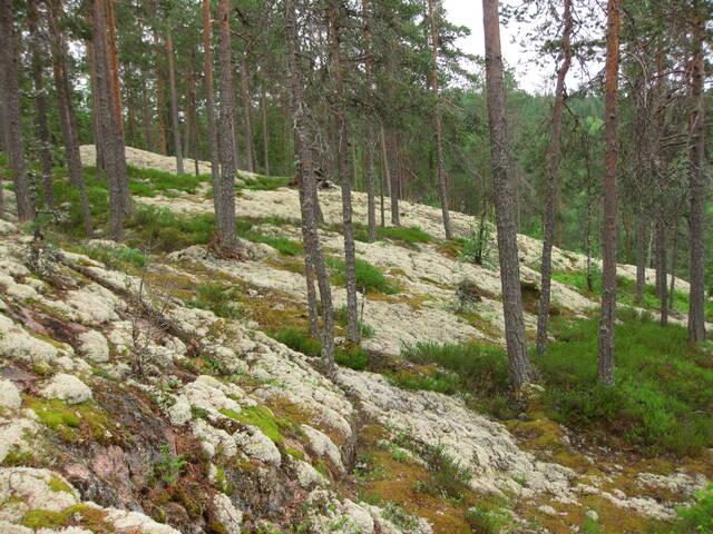 Vähäpuustoinen kallio