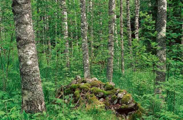 Muinaisjäännös metsässä