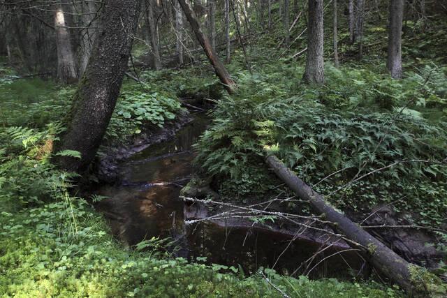 Puro rehevässä metsikössä