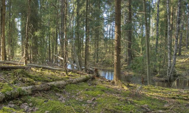 Puron suoma erityinen kasvuympäristö