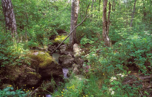 Kivinen puro
