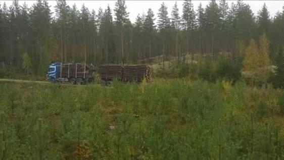 Täynnä puutavaraa oleva puutavara-auto on metsäautotiellä taimikon takana