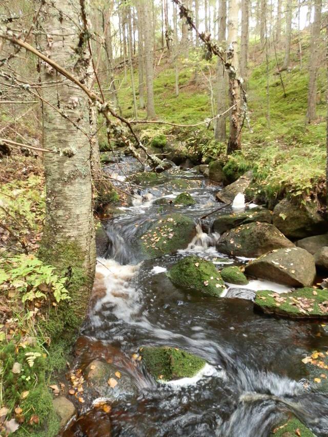 Luonnontilainen puro notkelmassa
