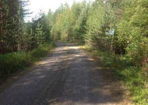 Näkemäesteenä reunan pienpuustoa metsätiellä.