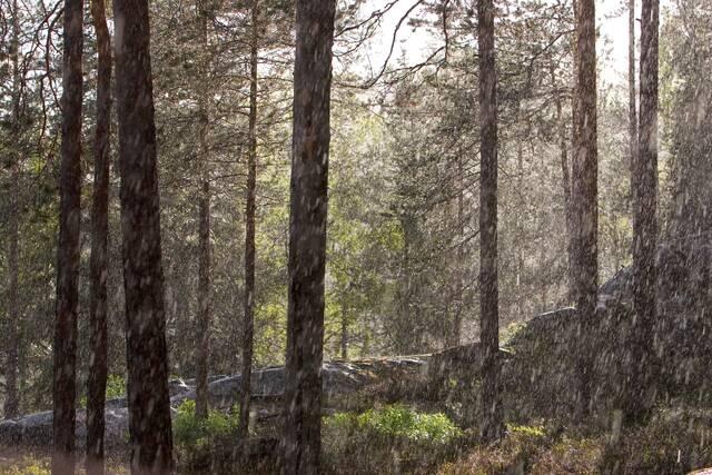 Vesisade metsässä