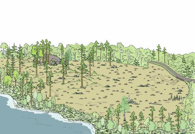 Siemenpuu- ja avohakkuuta kuivahkon kankaan männikössä
