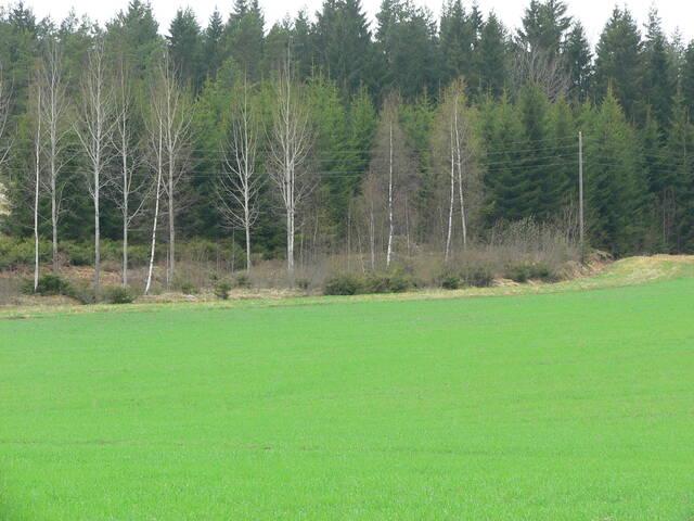 Pellon ja metsän vaihettumisvyöhyke