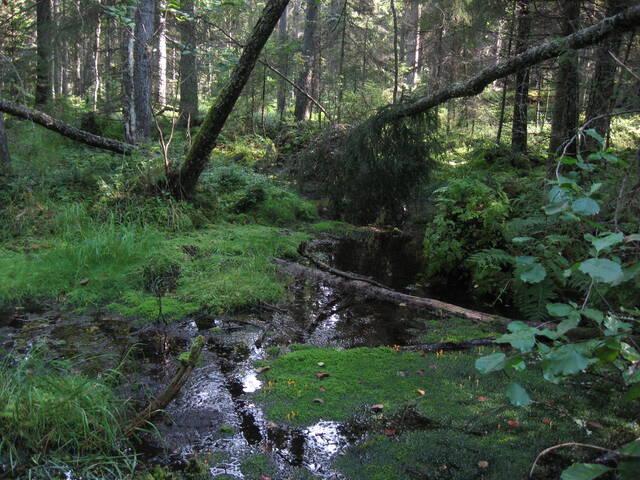 Lähde-elinympäristö luontokohteena