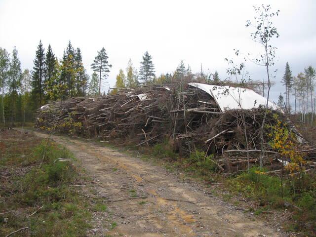 Energiapuupino metsätien varressa