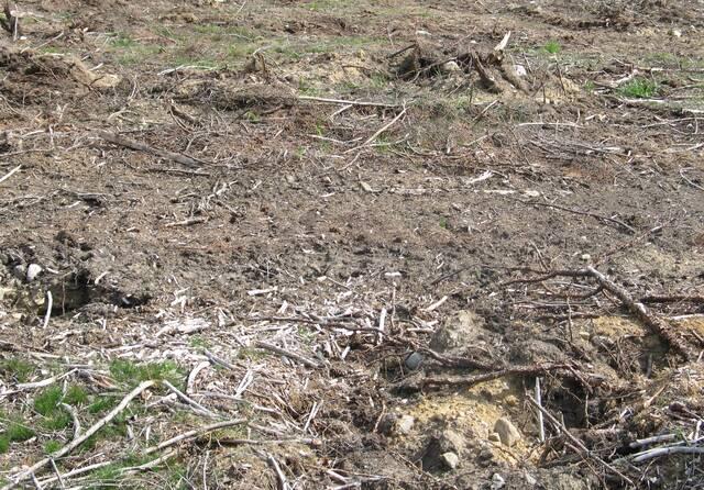 Maanpinta säilynyt enjänä kannonnostossa
