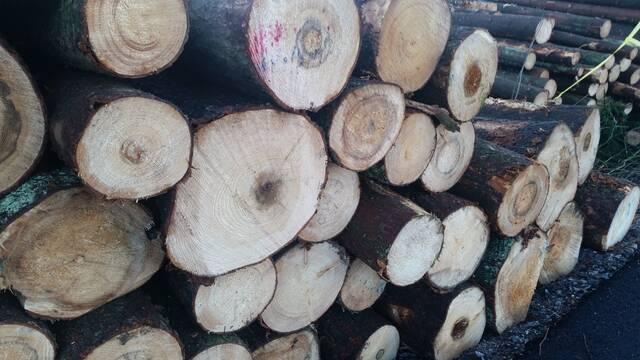 Juurikääpää puutavarassa