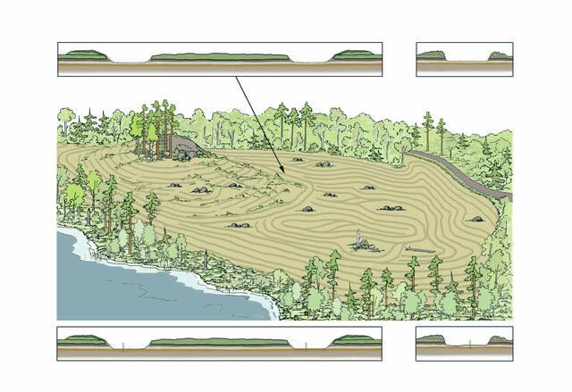 Eri maanmuokkausmenetelmien käyttö kuivahkolla kankaalla