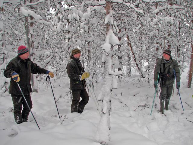 Talvinen vähäpuustoinen suo