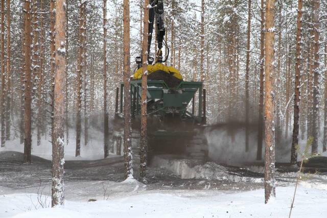 Koneellinen tuhkalannoitus käynnissä mäntyvaltaisessa suometsikössä