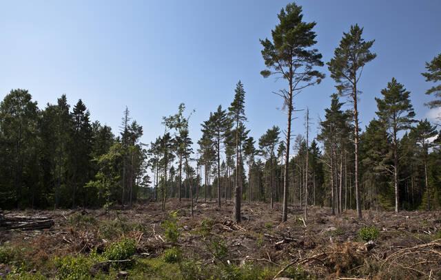 Metsämaisema