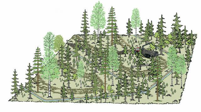 Jatkuvan kasvatuksen hakkuu turvemaan kuusivaltaisessa metsässä piirros