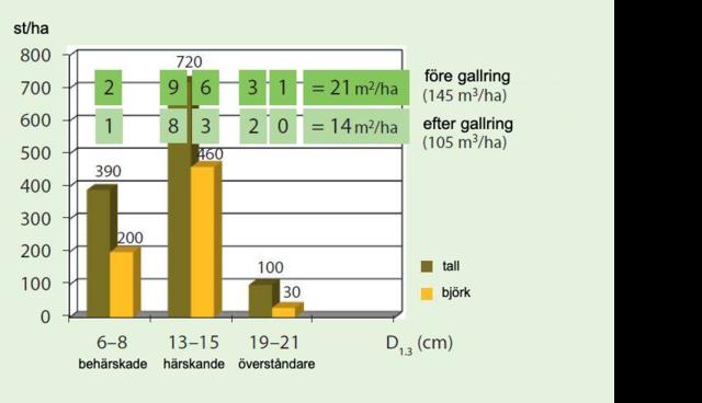 Exempel på beståndsstruktur före och efter gallring på lingontormo II