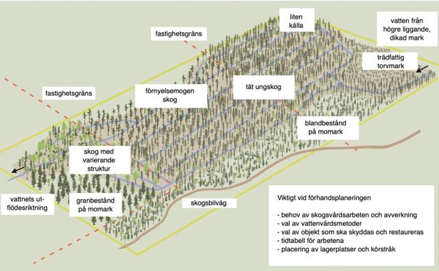 Samprojekt för skötsel av torvmarksskogar, ritning